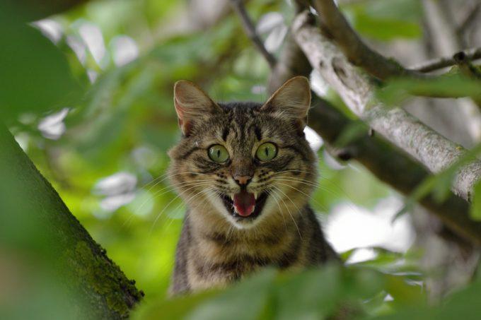 cat-1641959_1280